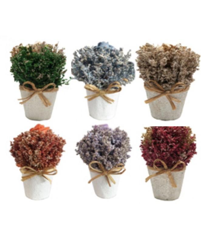 Arreglo floral DEL BOSQUE 15cm ap- en maceta cónic - MACETAS CON FLORES