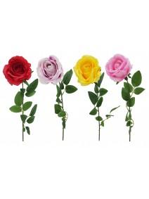 Rosa bicolor 9cm  x 63cm aprox - ROSAS