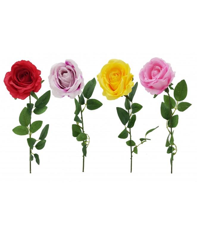 Rosa bicolor 9cm Ø x 63cm aprox - ROSAS