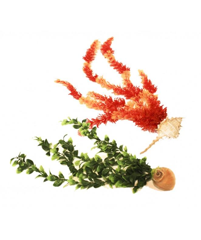 Planta marino p/pecera med c/base caracol - CARACOLES